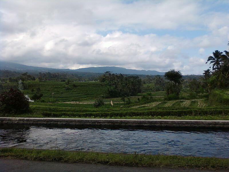 Les rizières sous un ciel chargé