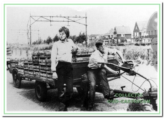 De aanvoer van aardbeien bestemd voor de veiling.