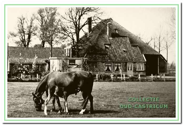De grote boerderij van Gerrit Veldt aan de Kooiweg 4.