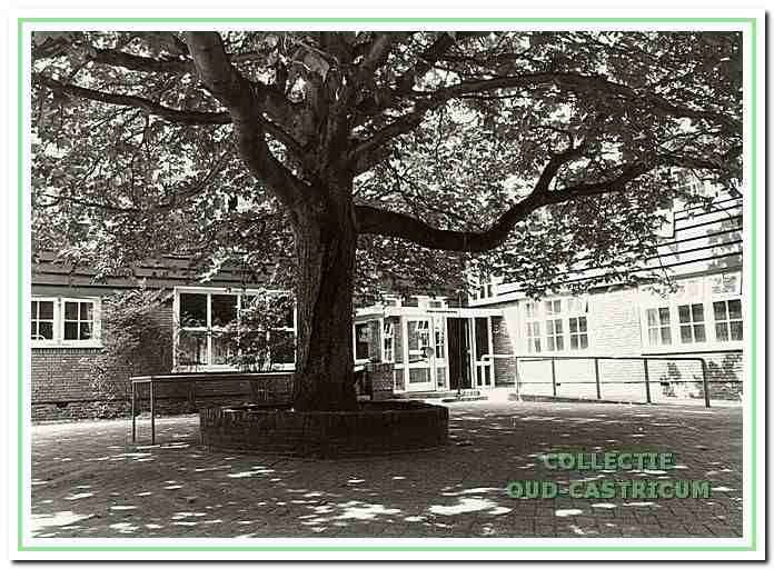 Jeugdherberg Koningsbosch. Na 60 jaar is de boom groot en het plantertje ...?