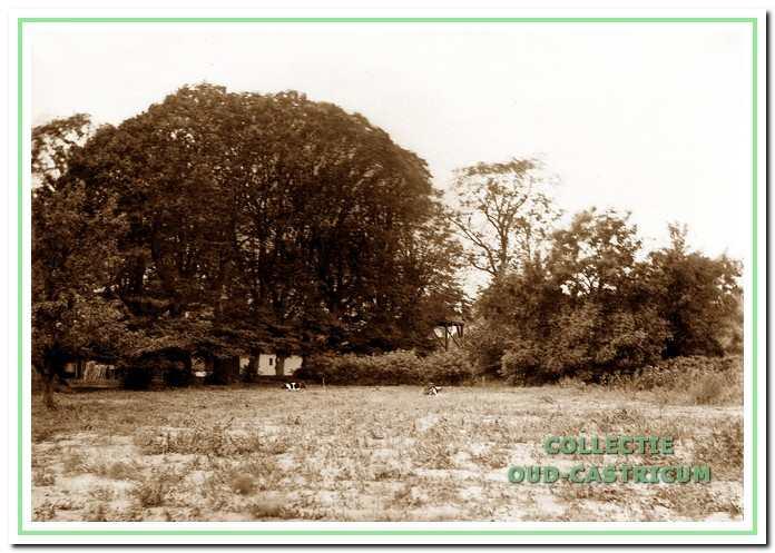 Verscholen achter het geboomte ligt het duinboerderijtje (foto nummer 502766).