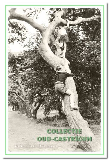De beruchte 'apenbomen'.