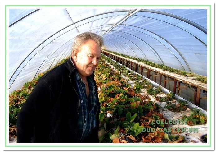 Piet Borst in de moderne aardbeienkas achter de boerderij.