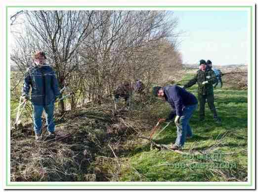 Onder leiding van Peter Mol (in groene kleding) zijn vrijwilligers bezig met het snoeien van een houtsingel.
