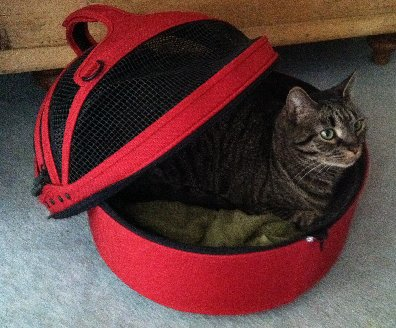 Best Cat Carriers For Your Travelling Cat Companion