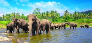 Best Sri Lanka family holidays
