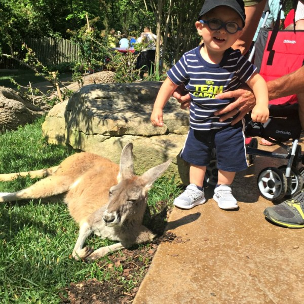 Travel Journal:  Nashville Zoo