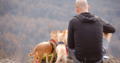Man and two dogs in mountain