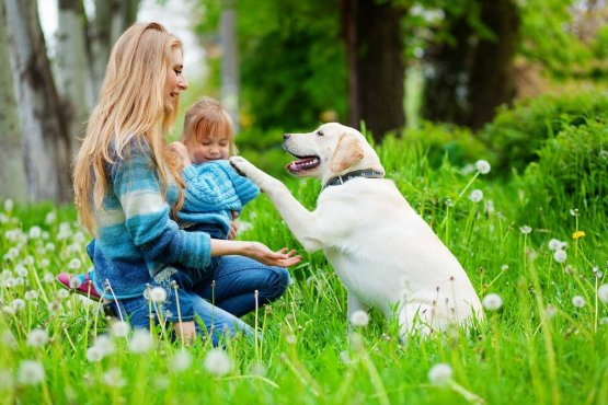 Dog with Owner and Baby