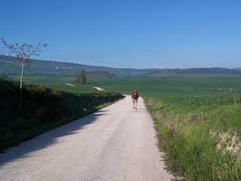 Camino outside Cizur Menor