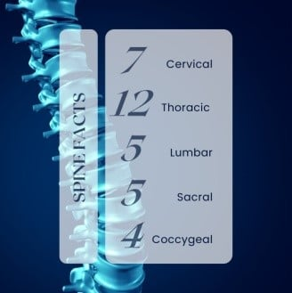 facts about the spine