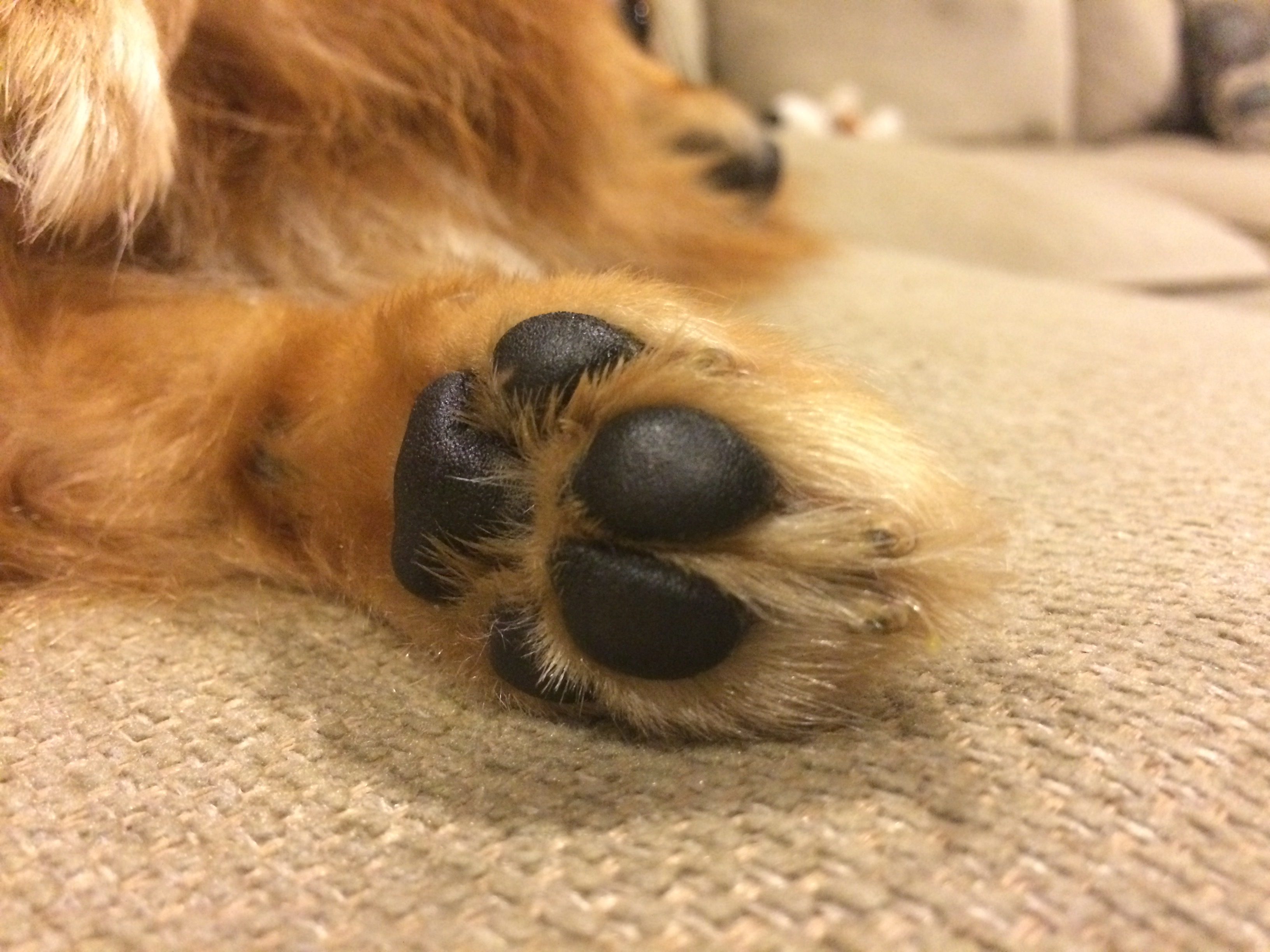 keeping-your-dogs-nose-paws-moisturized-naturally-coupon