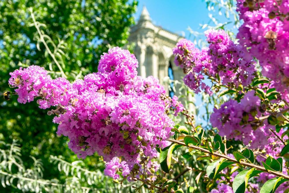 Paris in August: Flowers near Notre Dame