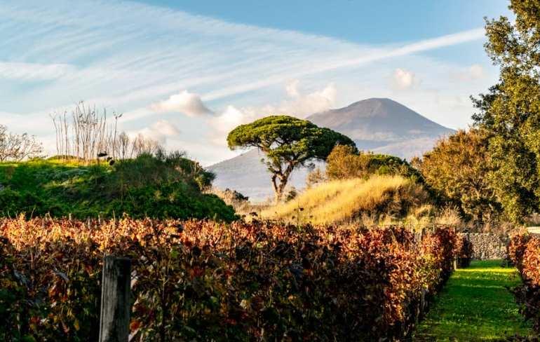 Visiting Pompeii and Mount Vesuvius: Mount Vesuvius and Vineyard