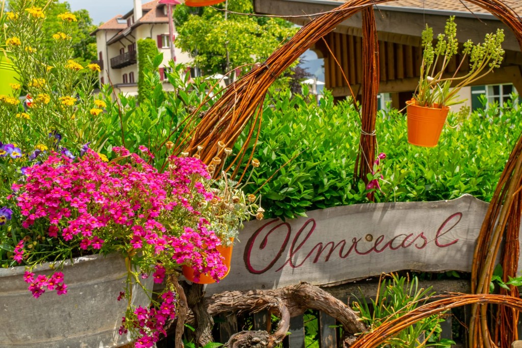 Best Things to Do in Bolzano, Italy: Flowers in City