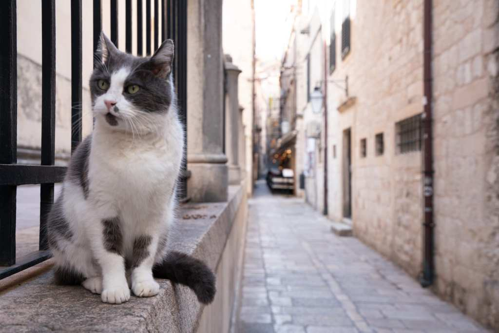 What to Do in Dubrovnik Croatia: Cat sitting on ledge in empty street