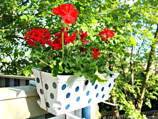 polka-dotted window boxes