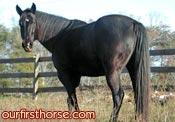 Horse Gas