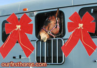 A horse makes a good present