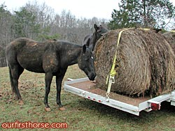 Round bale on the trailer