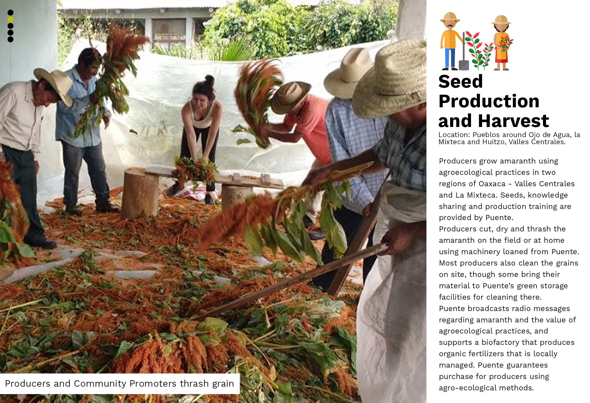 02-Seed Production and Harvest