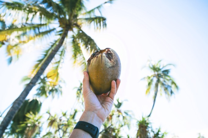 Wellness Roundup: 15 Most Amazing Benefits of Coconut Oil