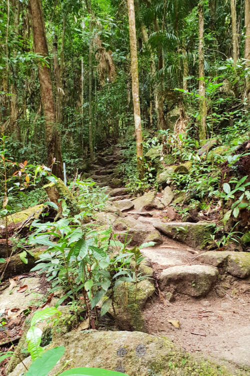 Mossman Gorge Queensland