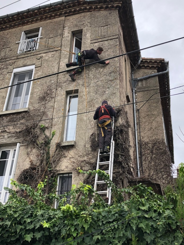 Ivy removal from our home