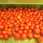 Canning & Preserving: Canning Tomatoes