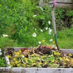 Green Tips for a Backyard Spring Clean Up