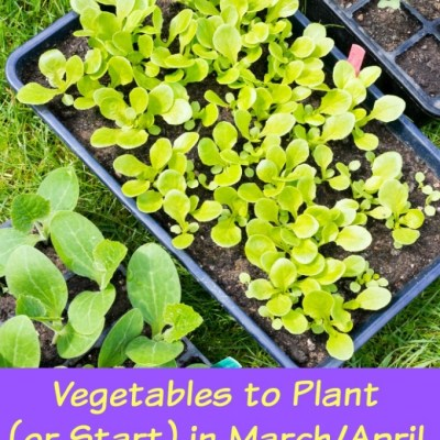 Vegetables to Plant in March and April