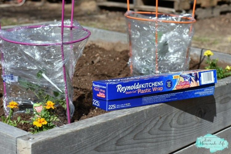 Life Hack: Save Your Garden Seedlings From Frost
