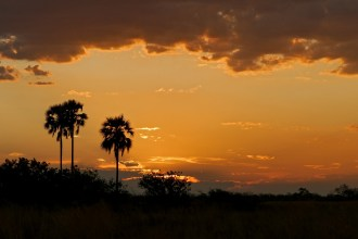 Superb Sunset of Botswana Wilderess