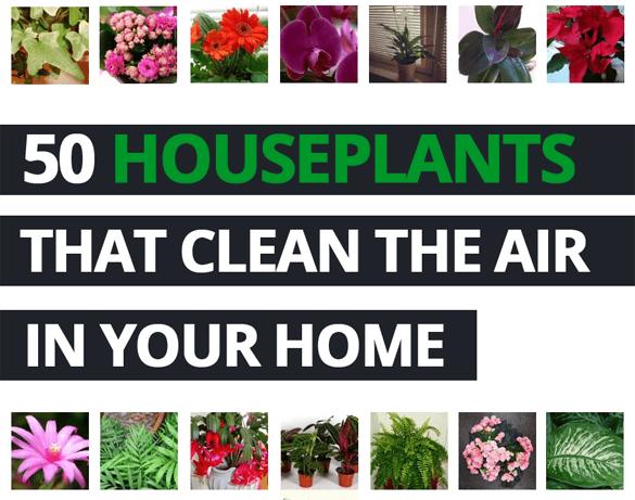 Top 50 air purifying plants that clean the air