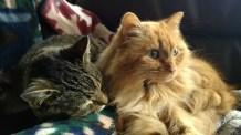 Rico & Wheezy