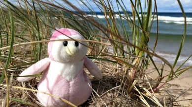 Penge hides out in the grass, because ya know begins don't fly no matter how windy it is!