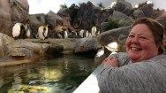 Nov 16 2017 enjoying penguins1