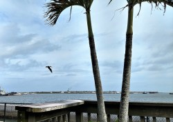 Port Canaveral View at Grills Seafood and Tiki Bar, Jan 27, 2018