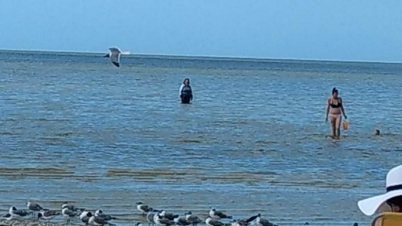 Deina swimming at Pine Island
