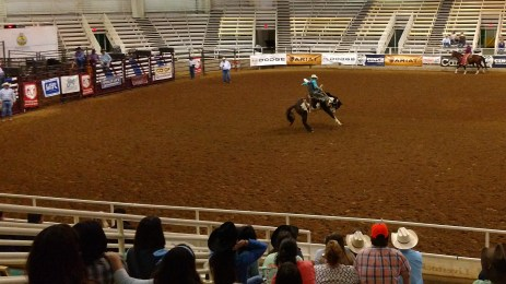 Bucking bronco contest at the Tennessee High School Rodeo Association's event