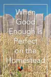 Do you fall prey to the comparison game? Click here to find out when good enough is perfect on the homestead and get things done. Comparison Game | Good Enough | Better than Perfect