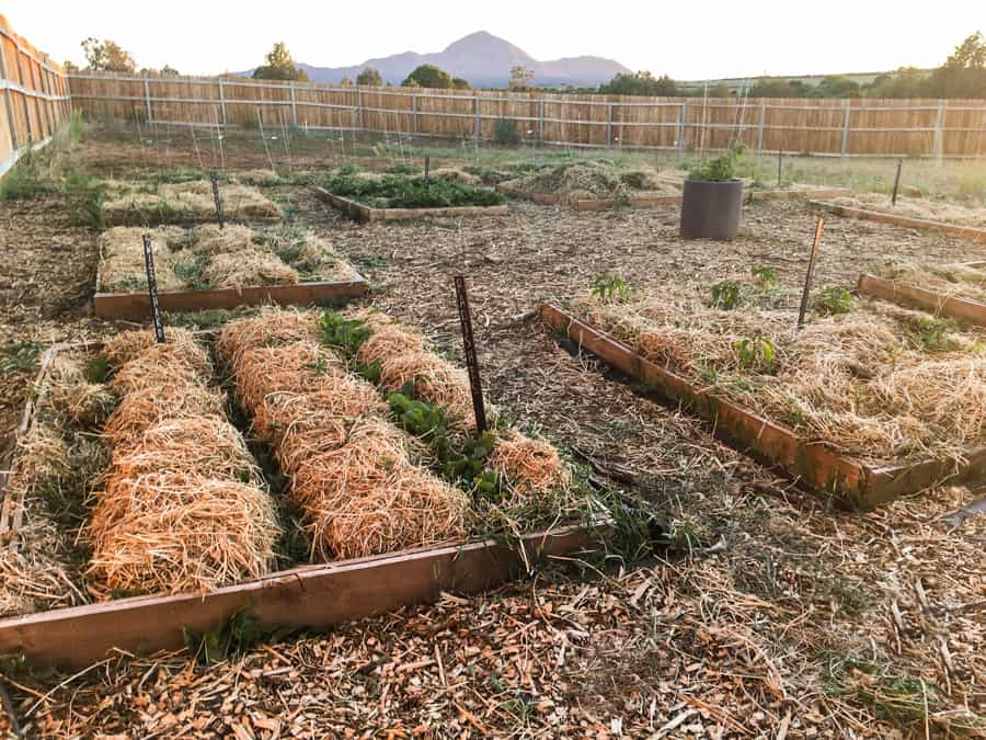 Have you tried the deep mulch method in your garden? Click here to see how using this method keeps the weeds at bay in my garden. Deep Mulch Gardening | Gardening Tips | Back to Eden Garden
