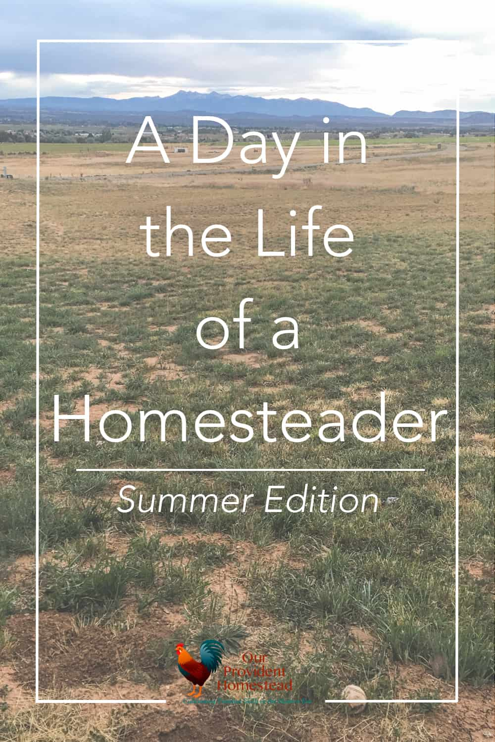 What does a homesteader do all day? Click here to see a typical day in the life of this homesteader in the summertime. Homesteading | Homestead Life | Day in the Life