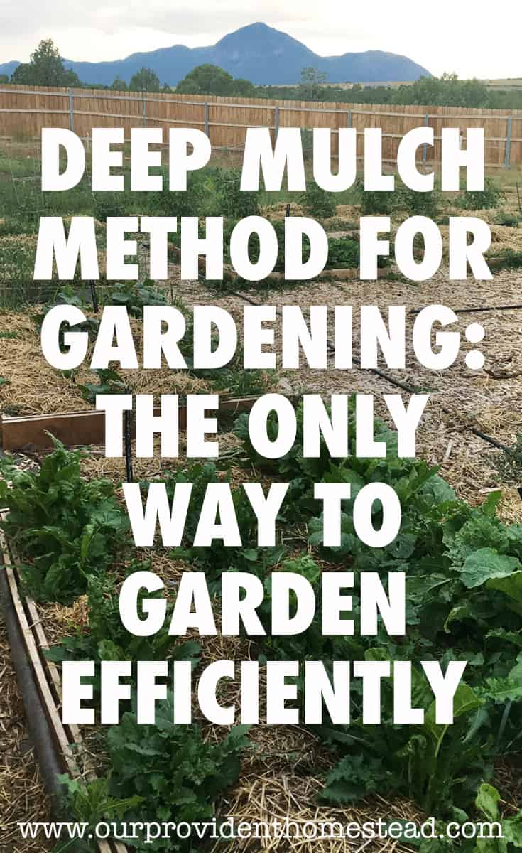 Are weeds your garden's worst enemy? Click here to see how using the deep mulch method for gardening helped us enjoy the harvest this year. #harvest #garden #gardeningtips #deepmulch