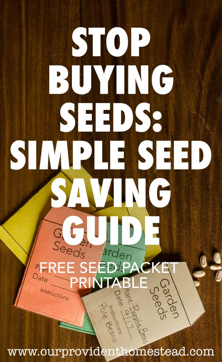 Would you like to learn how to garden without having to buy seeds every year? Click here to see how seed saving can save you time and money, and get your free seed packet printable. #freebie #freeprintable #seedsaving #gardeningtips #gardeninghacks