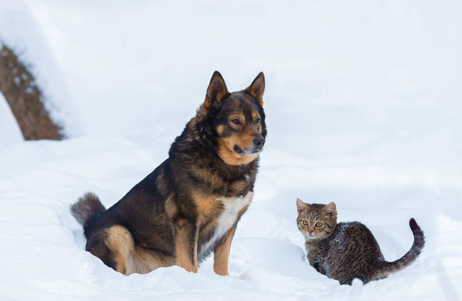 winter snowy scene with a dog and cat