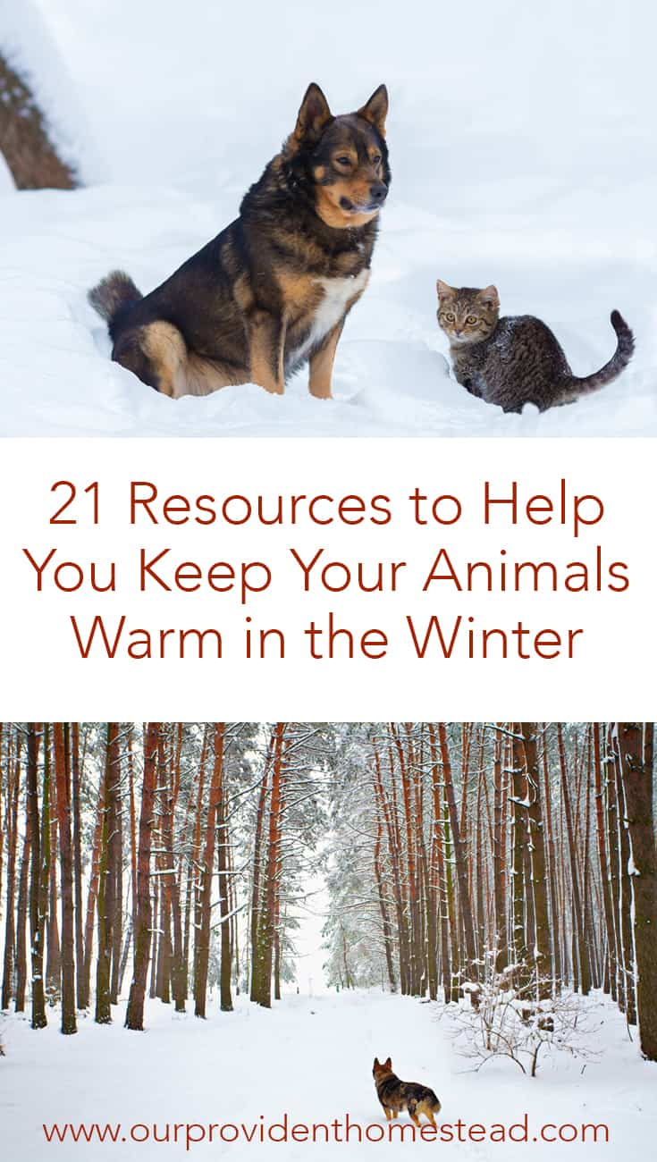 Do you worry about your animals in the winter? Click here to see 21 resources to help you keep your animals warm in the winter. #homesteading #homesteadanimals #farmanimals #animalcare #wintercare