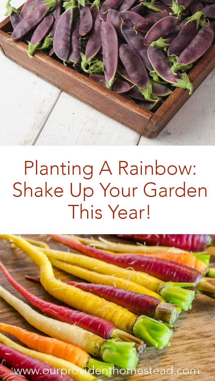 Is your garden boring? Click here to see how you can plant a rainbow of veggies that you could never find in the grocery store and shake up your garden this year! #gardening #homesteading #gardeningtips #gardenideas