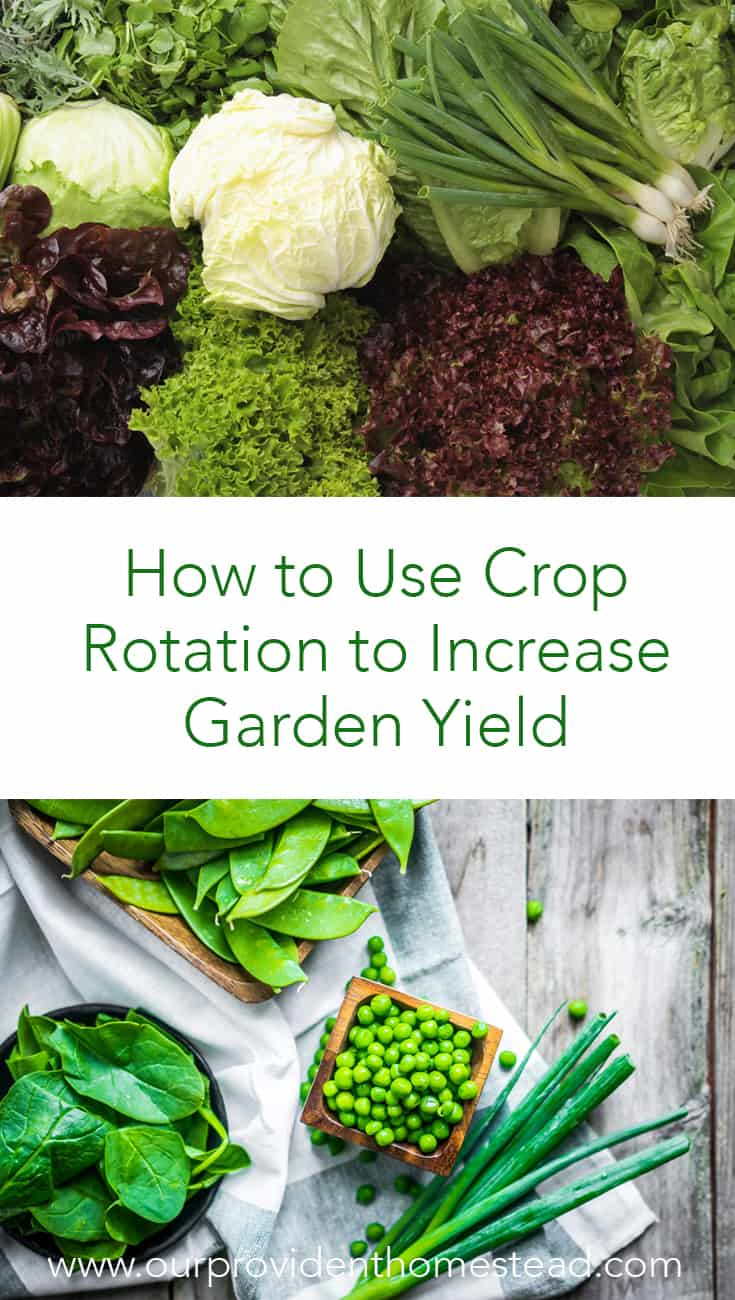 Do you want to increase the vegetable yield in your garden this year? Click here to see how to use crop rotation for more harvest and healthier food for your family. #garden #gardening #gardentips #vegetablegarden