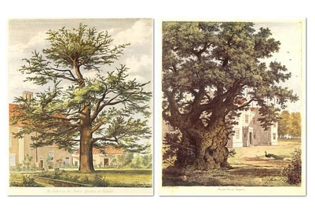 Jacob G. Strutt, Trees III, Set of Two on OneKingsLane.com